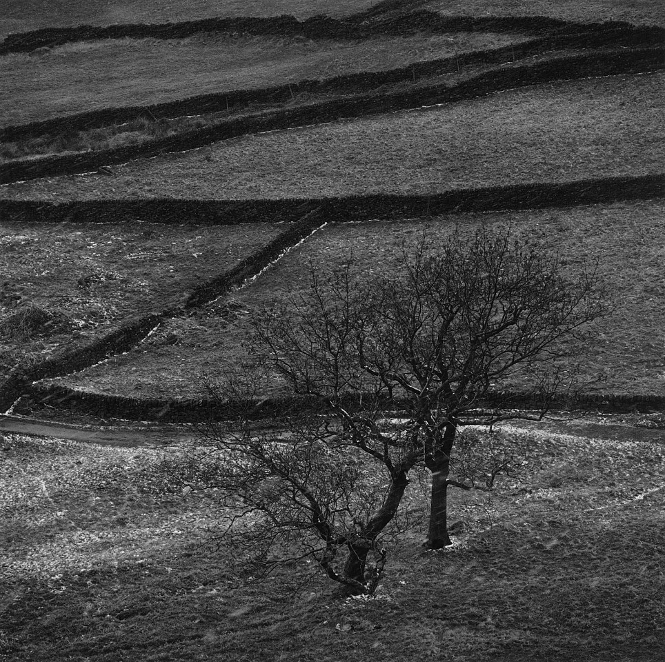 Mariana Cook ,   Medievall Field System in Snow with Trees, White Peak, England  ,  2004     Gelatin silver print ,  15 1/4 x 15 3/8 in.     Signed, dated, titled & numbered on verso of mount in edition of 6; mat size: 30 x 24