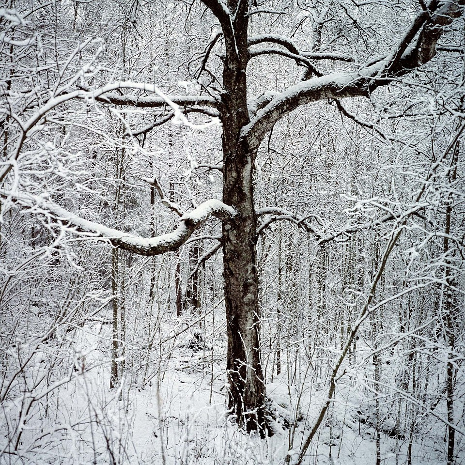 Nina Korhonen ,   White Morning, Finland  ,  2005     Archival pigment print ,  23 5/8 x 23 5/8 in. (60 x 60 cm)     From the series and book
